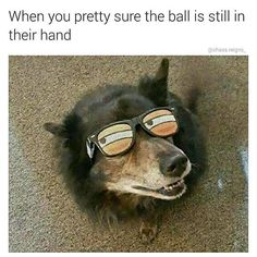 21 Memes Your Dog Would Definitely Laugh At If They Could Read/Laugh