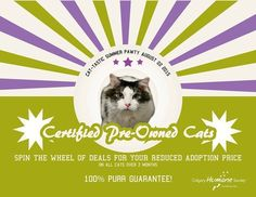 """For one day only, the Humane Society offered reduced adoption prices for all """"pre-owned cats"""" on the lot. 