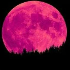 Pink or purple moon