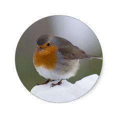 European Robin in snow stickers