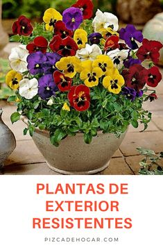 Arleen Abreu Acarleencmw Perfil Pinterest