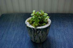Beton saksı, concrete  flowerpot