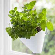 Little Urban Farmers hanging gardens are planters that suction cup to your kitchen window. They have been designed beautifully so that you can conveniently