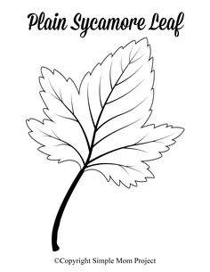 Free Printable Large Leaf Templates, Stencils and Patterns Looking for an autumn leaf craft idea? Use these free large printable leaf cutout templates so spark your creativity! These fall leaf stencils make a perfect easy coloring page for pres Maple Leaf Template, Leaf Template Printable, Printable Leaves, Pumpkin Template, Printable Crafts, Printables, Heart Template, Printable Stencils, Free Printable