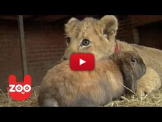 BFF Spotlight: Simba The Lion Cub, Monty The Dog, And Thumper The Rabbit