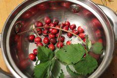 Őszi erdei tea Medicinal Herbs, Fruit, Food, Essen, Yemek, Eten, Meals