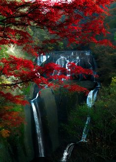 The red leaves the fall with the waterfall in the background it's just amazing
