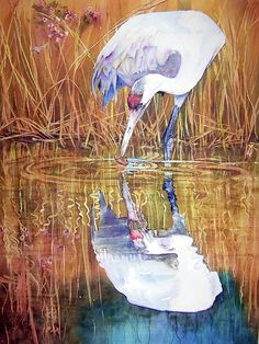 A Taste Of Autumn by Vicky Lilla  A Whooping Crane picks through fallen leaves at the edge of a marsh pond.