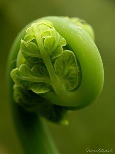 Macro Photography, Damon Clarke, Dandenong Fern, forest-collection, photo, art, macrophotography