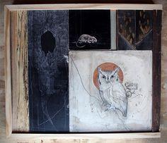 Screech Owl :: David Hale