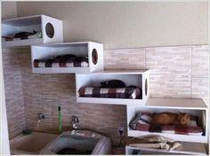 Animal Room, Cat Run, Cat Perch, Cat Towers, Cat Playground, Cat Shelves, Cat Condo, Pet Furniture, Furniture Design