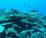 diving spots, best diving spots, top diving spots