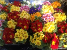 This month 5 Acre Nurseries joined the Local Produce Market selling a huge variety of beautiful flowers! 5 Acre will now be at the market every month selling some of these flowers! Come on down the next market to see whats in season this coming month!