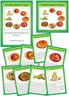 "Eight reading cards on the theme ""A chick is born in 21 days"". The pictures come in … - Best Education Advises ! Teaching Science, Teaching Ideas, Card Reading, Elementary Schools, Montessori, Education, Pictures, Food, Album"