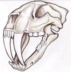 46 Best Sabertooth Tiger Tattoo Drawings Images Tattoo Drawings