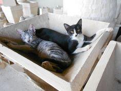 """""""Balaio de gatos"""": Dudu e Pretinha"""