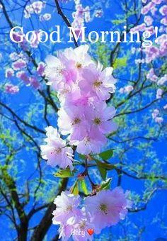 Cherry Blossom Tree, Blossom Trees, Cherry Tree, Birch Tree Wallpaper, Small Palm Trees, Orange Wedding Colors, Baumgarten, Flower Phone Wallpaper, Hd Wallpaper