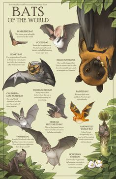 All of these bats are real bat species and absolutely none of these facts are exaggerated in any way. The flying fox's size isn't, though. Animals And Pets, Baby Animals, Cute Animals, Animal Facts, Animal Memes, Bat Species, Posca Art, Baby Bats, Fruit Bat