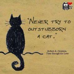 Truth. LOL Crazy Cat Lady Meme, Crazy Cats, Statues, Black Cat Humor, Black Cat Art, Black Cats, Lots Of Cats, Cat Character, Cat Posters
