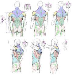 how to draw pumpkin Anatomy Sketches, Anatomy Drawing, Anatomy Art, Body Reference Drawing, Anatomy Reference, Art Reference Poses, Human Drawing, Body Drawing, Drawing Poses