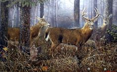 Who STARTLED who in Ervin Molnar's print? The whitetail deer or the grouse? The buck and two does are on alert probably because of the noise of the flushing grouse, while the grouse was startled out o Deer Art, Moose Art, Fishing In Canada, Deer Drawing, Deer Pictures, Grouse, Oh Deer, Wildlife Art, Deer Hunting