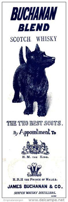 Original - Anzeige / Advertise 1903 : (ENGLISH) BUCHANAN BLEND SCOTCH WHISKY -  55 x 175 mm