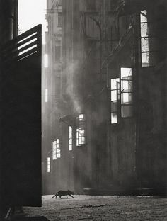 vintage everyday: Wonderful Pictures of Street Scenes of Hong Kong in the by Fan HO Fan Ho, Vintage Photography, Art Photography, Goldscheider, Ansel Adams, Urban Life, Street Photographers, Black And White Photography, Hong Kong