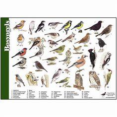 per 5 Science For Kids, Science Nature, Nature Hunt, Music Like, Bird Illustration, Fauna, Bird Prints, Bird Watching, Natural History