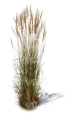 A tuft of tall grass - Miniature Garden Landscape Sketch, Landscape Elements, Landscape Design, Garden Design, Photoshop Essentials, Trees Top View, Architectural Plants, Desktop Background Pictures, Garden Illustration