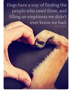 Dogs have a way of finding the people who need them, and filling an emptiness we didn't ever know we had. Source by riekehamburg dog dog memes dog videos videos wallpaper dog memes dog quotes dogs dogs pictures dogs videos puppies puppy video Cute Puppies, Cute Dogs, Dogs And Puppies, Doggies, Labrador Puppies, Maltese Dogs, Terrier Puppies, I Love Dogs, Puppy Love