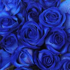 Beautiful Rose Flowers, Exotic Flowers, Love Flowers, Light Blue Aesthetic, Flower Aesthetic, Rose Gold Pallette, Blue Roses Wallpaper, Blue Shades Colors, Everything Is Blue