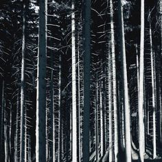 high contrast forest High Contrast, Abstract, Photography, Home Decor, Art, Summary, Art Background, Photograph, Decoration Home