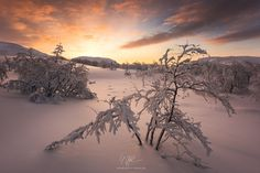 """Hot and Cold by Stefan Hefele  """"Hot and Cold"""" - Finland  While we chased the light, it always came back to a lovely interlude. Even in a cold and otherwise icy tundra desert light can create a warm and cozy atmosphere.  Prints and licensing available.  Facebook Fan Site www.stefan-hefele.de  Stefa"""