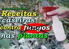 Receita caseira para combater fungos das plantas que causam tanto mal as plantas.  Fungos em tomateiros ajuda muito como prevenção antes de acontecer. Se previna aplicando uma vez por semana ou toda vez que chover pode ser aplicado