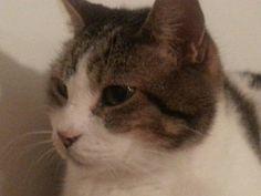Poussin, un amour de chat.
