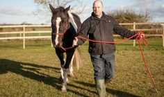 """Horse therapy helping veteran of Gulf War . . .after just 10 minutes standing in a field with a horse he felt relaxed for the """"first time in years"""" and able to """"feel again""""."""