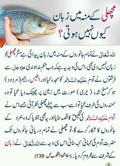 Urdu Quotes Islamic, Islamic Phrases, Islamic Teachings, Islamic Messages, Muslim Quotes, Islamic Inspirational Quotes, Islamic Dua, Hazrat Ali Sayings, Imam Ali Quotes