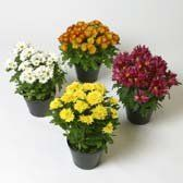 Mims - Expo Ease Plant Services Plant Design, Plant Decor, Special Events, Plants, Planters, Plant, Planting