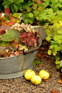 I have a galvanized tub just waiting for something to put in it....  Now have a good idea.  But I am not ready for Fall.
