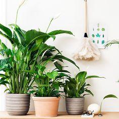sett i rriskorg frå ikea Home Flowers, Houseplants, Indoor Plants, Planter Pots, Home Decor, Gardening, Bedroom, Inside Plants, Decoration Home