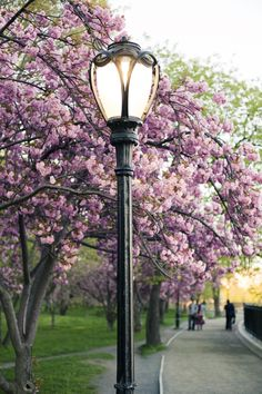 Central Park New York City | Spring is almost here! Get in the great sights while you're visiting! | #travel #NYC | http://newyorktours.onboardtours.com/