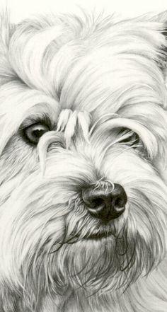 SetterStuff.com great artwork, prints for sale! Westie Prints-4