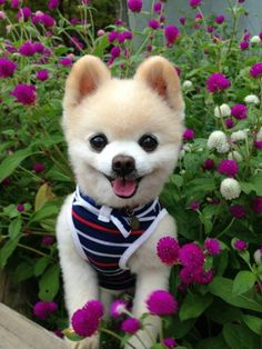 Pretty flowers and cute puppies