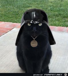 Darth Kater