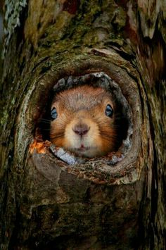 SQUIRREL IN HIDING!