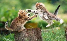 purrfect kočka seznamka speed dating události southampton