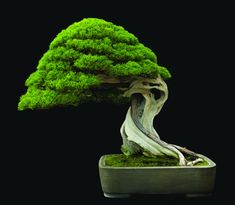 Fine Bonsai | Art & Nature | Abbeville Press