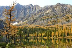 5 Winning Day Hikes from Calgary to see the larches - O'Brien Lake surrounded by larches