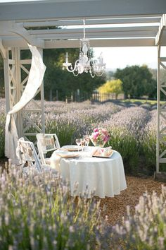 Let's Meet for Lunch in the Lavender Field! Thefrenchinspiredroom.com