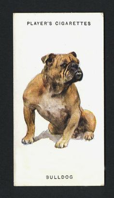 1931 bulldog cigarette card
